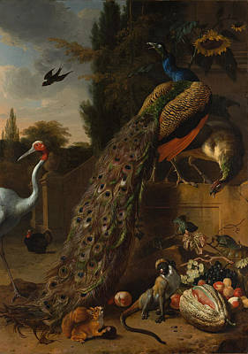 Poster featuring the painting Peacocks by Melchior d'Hondecoeter