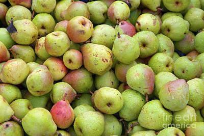 Pear Harvest Poster