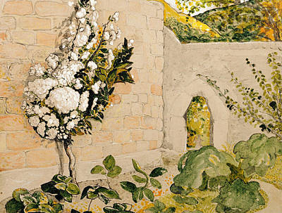 Pear Tree In A Walled Garden Poster