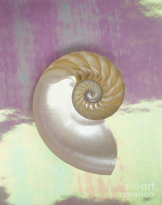 Pearl Nautilus Shell Poster by Kate Turning and Tom Gibson - Printscapes