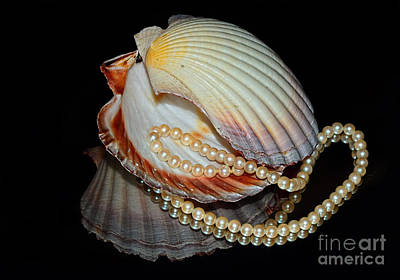 Pearly Shells By Kaye Menner Poster