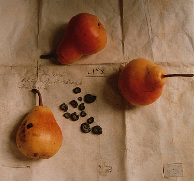 Pears And Ammonites On Paper Poster by Elspeth Ross