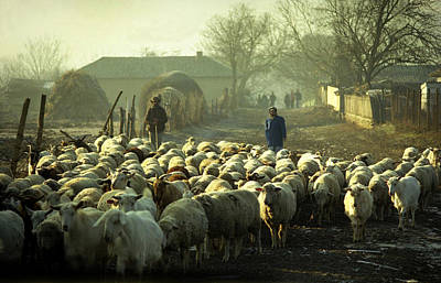 Peasants And Herd On The Village Path Poster by Emanuel Tanjala