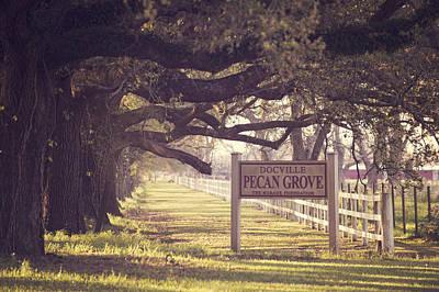 Pecan Grove  Poster