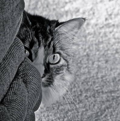 Peek A Boo Poster