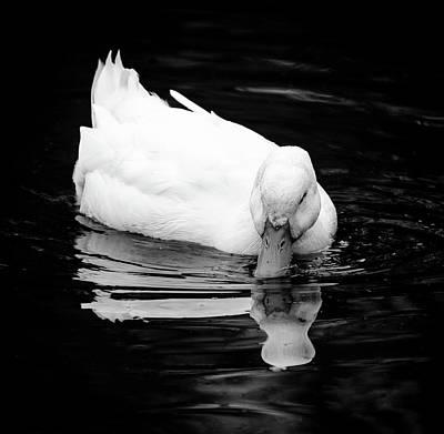 Peek-ing Duck Poster