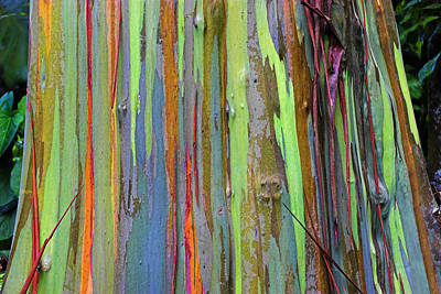 Poster featuring the photograph Peeling Bark- St Lucia. by Chester Williams