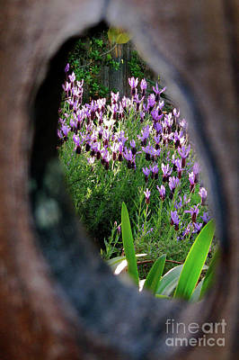 Peephole Garden Poster by CML Brown