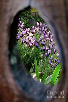 Peephole Garden Poster