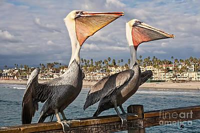 Pelican - A Happy Landing Poster