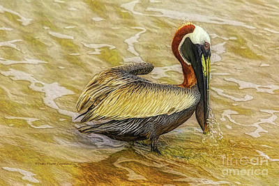 Pelican At The Beach Poster