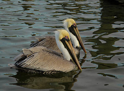 Poster featuring the photograph Pelican Duo by Jean Noren