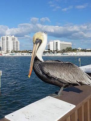 Pelican -florida Poster