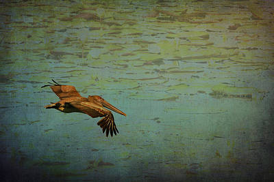 Pelican Gliding Above The Lily Pond  Poster by Carla Parris