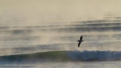 Pelican In Sea Smoke Poster