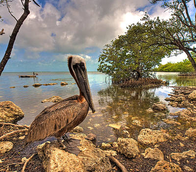 Pelican In The Florida Keys Poster