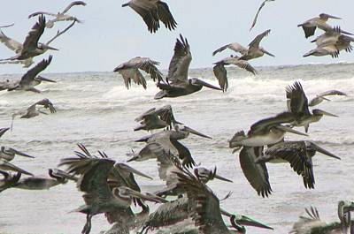 Poster featuring the photograph Pelican Migration  by Pamela Patch