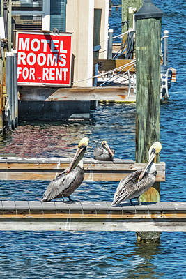 Poster featuring the photograph Pelican Motel by Bob Slitzan