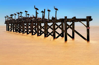 Poster featuring the photograph Pelican Pier Near Pass Christian - Mississippi by Jason Politte
