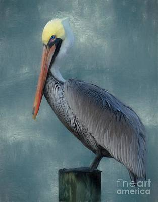 Poster featuring the photograph Pelican Portrait by Benanne Stiens