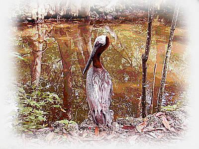 Pelican Posed Poster