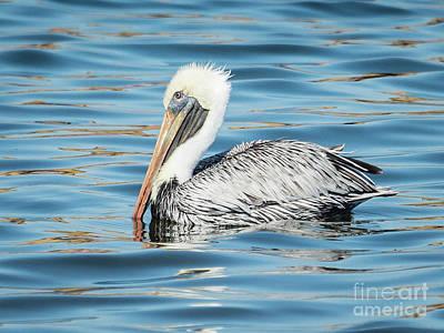 Pelican Relaxing Poster