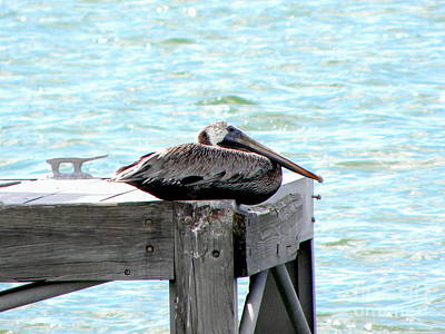 Poster featuring the photograph Pelican Resting by Terri Mills
