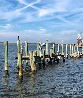 Pelican Row At Fernandina  Beach Poster
