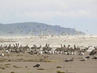 Poster featuring the photograph Pelicans And Gulls by Pamela Patch