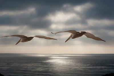 Pelicans At Sea Poster