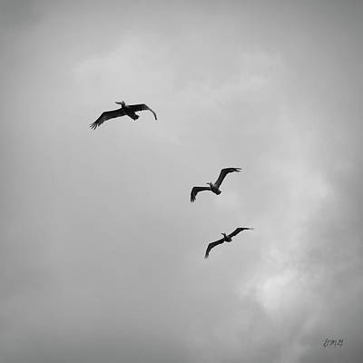 Pelicans In Flight I Bw Poster