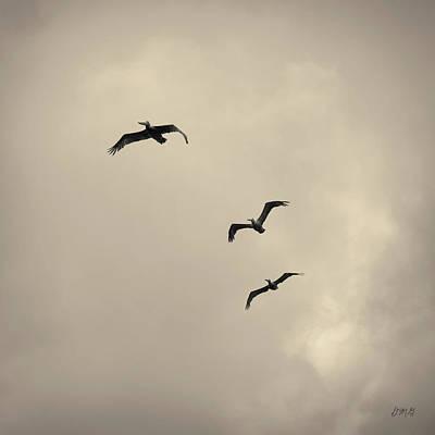 Pelicans In Flight I Toned Poster