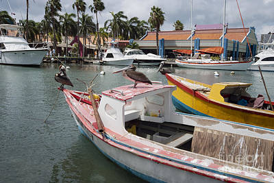 Pelicans On A Small Fishing Boat At Oranjestad Harbor, Aruba, Caribbean Islands Poster