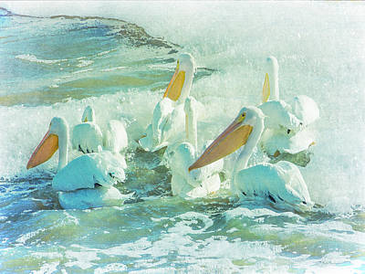 Pelicans On The Tide Poster