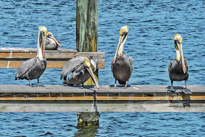 Poster featuring the photograph Pelicans Waiting For Their Ship To Come In by Bob Slitzan