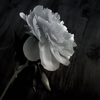 Poster featuring the photograph Peonie by Sharon Jones