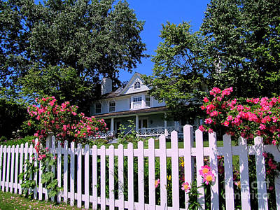 Peonies And Picket Fences Poster
