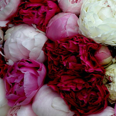 Peony Bouquet Poster
