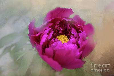 Peony Poster by Eva Lechner