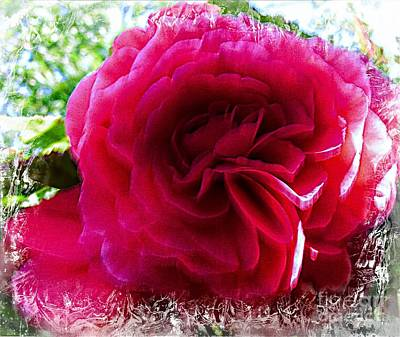 Peony In Red Poster