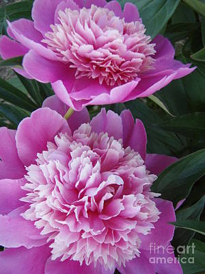 Poster featuring the photograph Peony by Kristine Nora