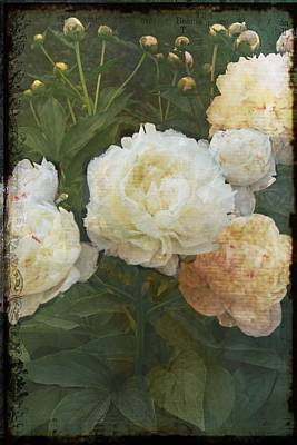 Poster featuring the photograph Peony by Rosemary Aubut