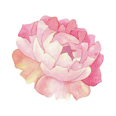 Poster featuring the painting Peony Watercolor  by Taylan Apukovska