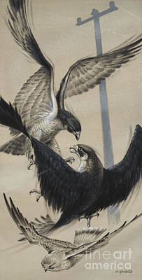 Peregrine Falcon And Kestrel Poster