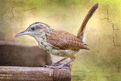 Perky Little Wren Poster by Bonnie Barry