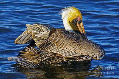 Perky Pelican Poster
