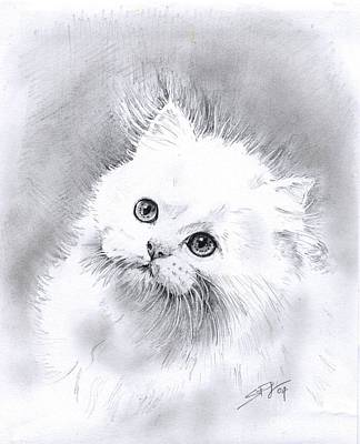 Poster featuring the drawing Persian Cat by Sandra Phryce-Jones