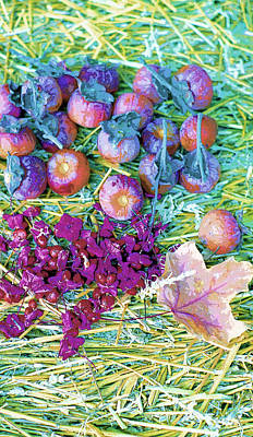 Persimmons And Bittersweet Image Poster by Paul Price