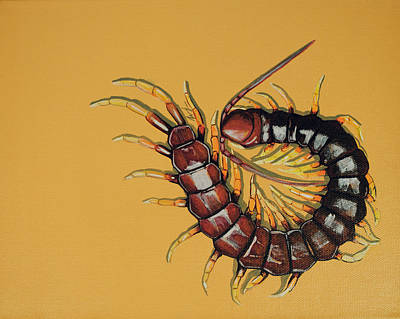 Peruvian Centipede Poster by Jude Labuszewski