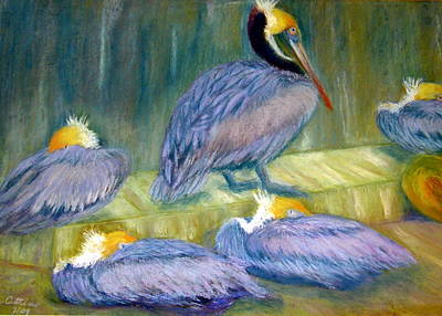 Poster featuring the pastel Peruvian Pelicans Two Pastel by Antonia Citrino